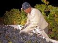 Wine Institute: 2016 California Wine Harvest Report