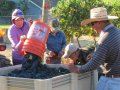 Southern Oregon Harvest Heats Up for Homestretch