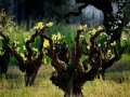 Vineyard Deals: Williams Selyem Buys Sonoma History, While Sea Smoke Buys a Neighbor